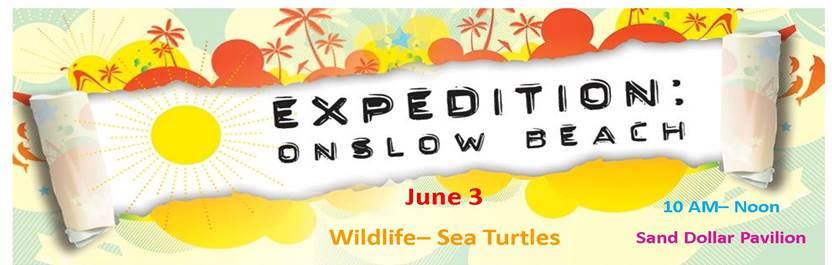 Sea turtles featured in Onslow Beach Expedition (Image 1)_3118