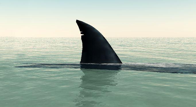 shark fin_19977