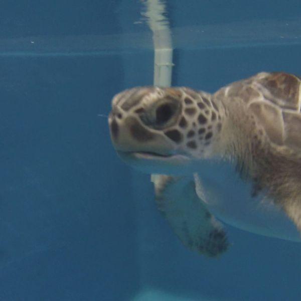 loggerhead_sea_turtle_30413