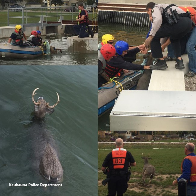 buck-rescue-from-kaukauna-canal_89362