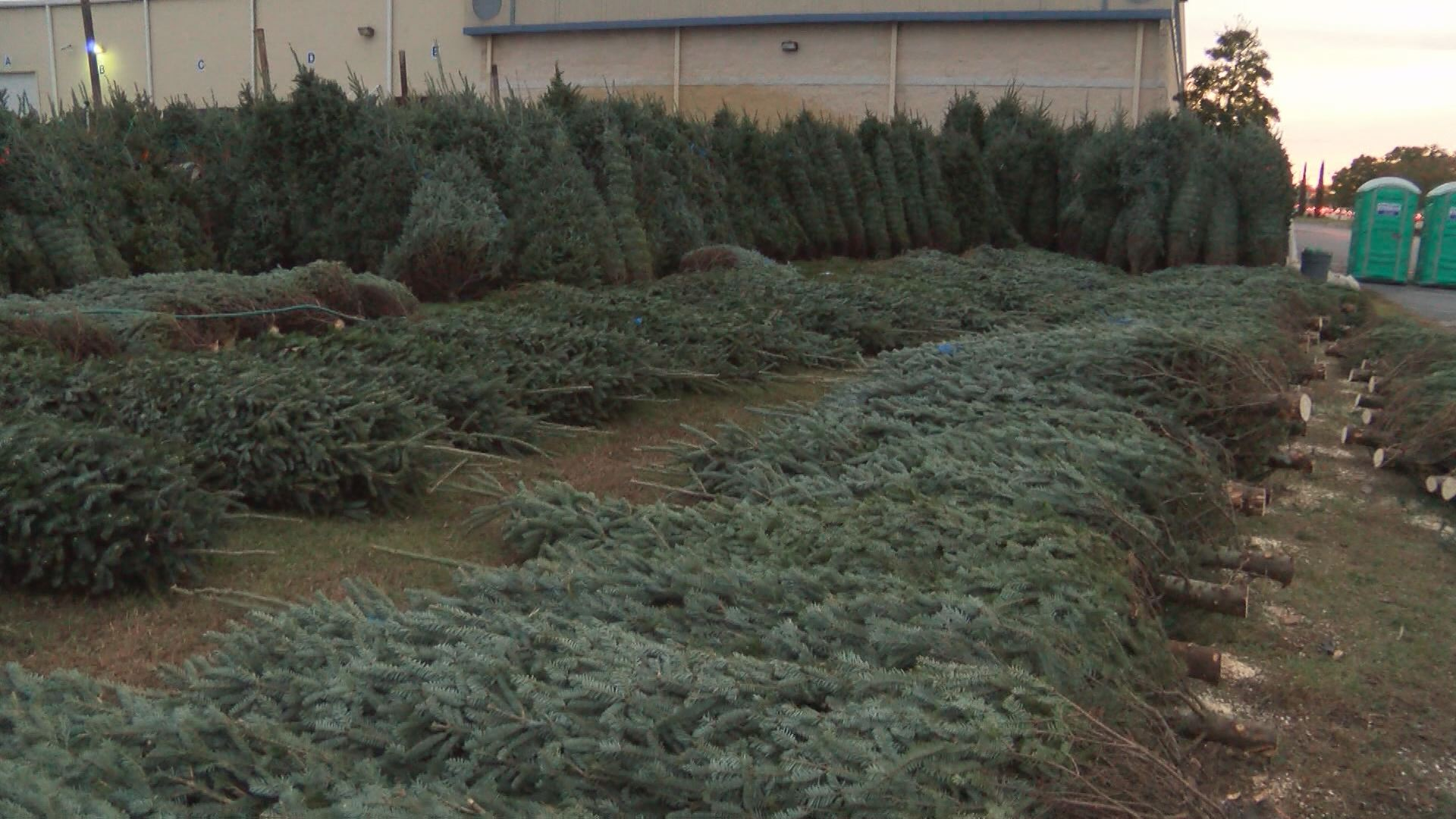 CHRISTMAS TREES_114491