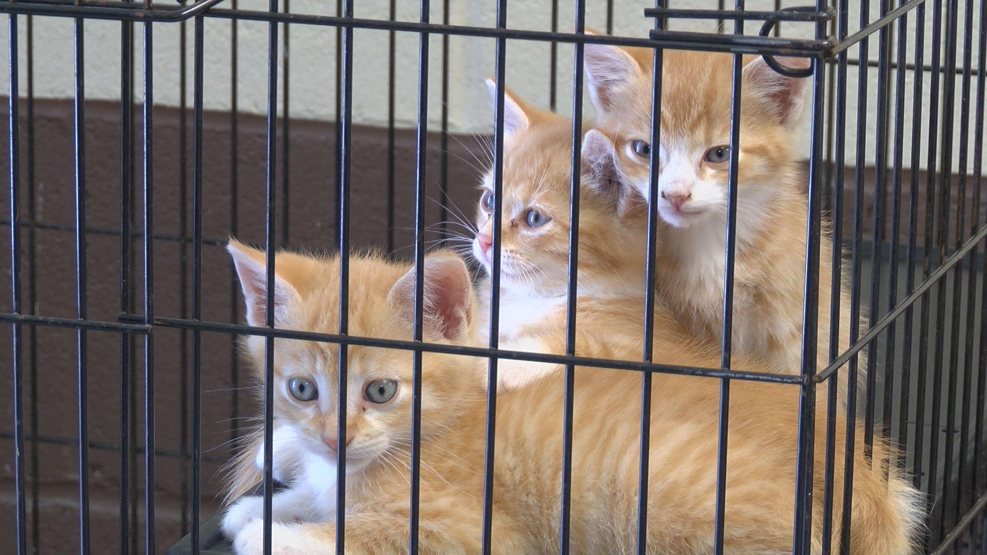havelock cats_106274