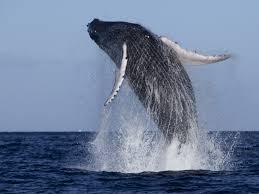 whale_174829