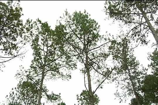 HOFMANN FOREST_186663