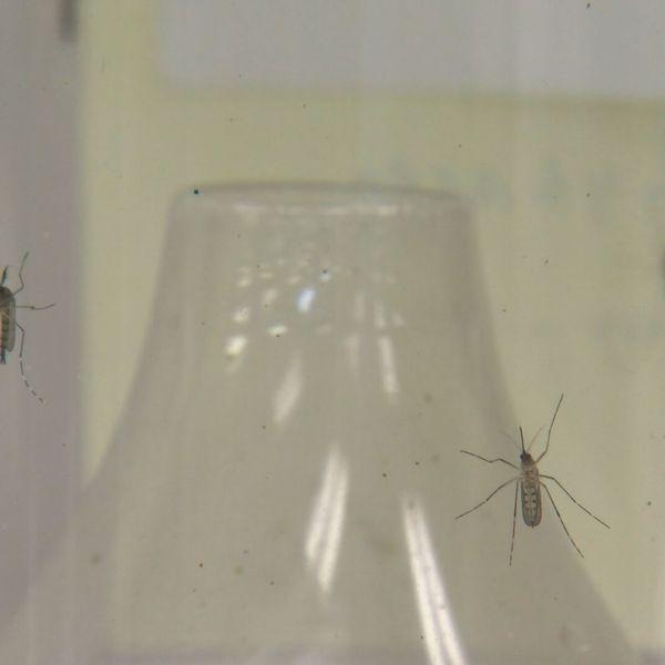 mosquito_184943