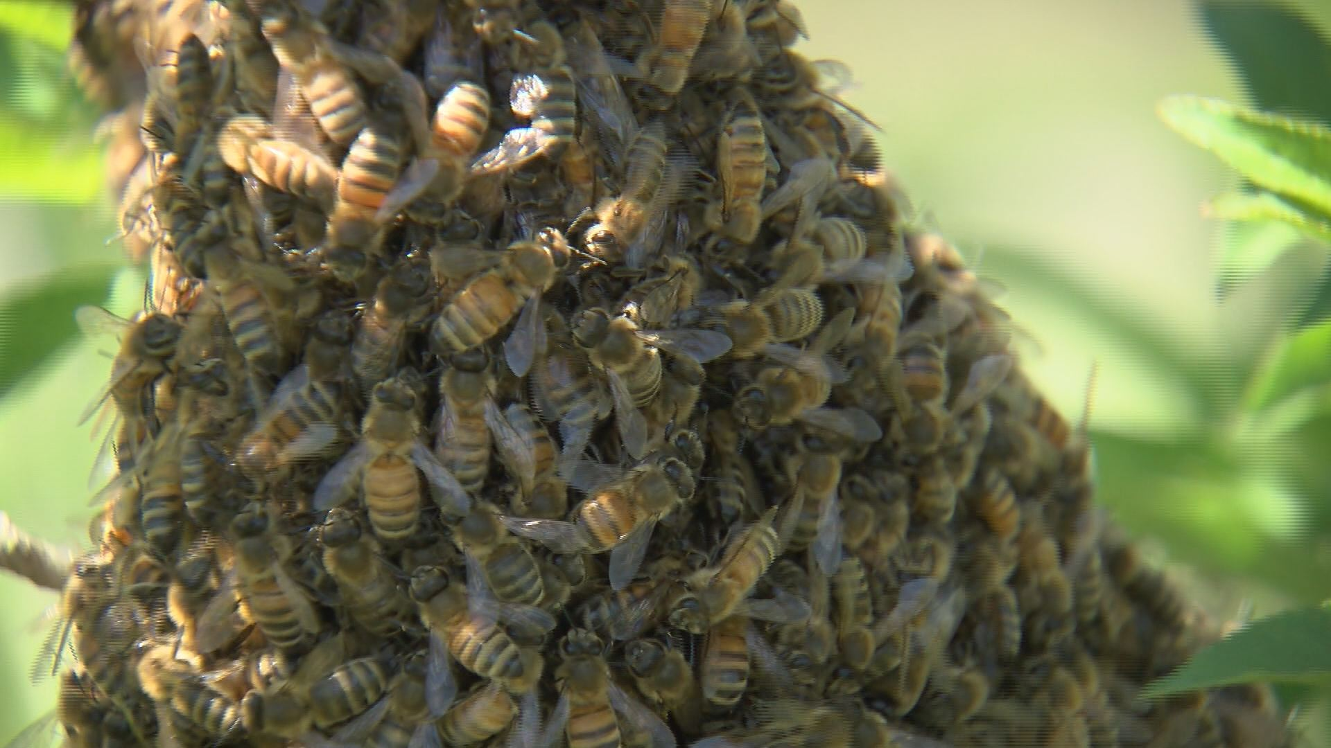 bees_194685
