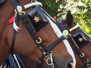 horses 8_206541
