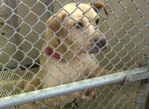 animal adoption_214311