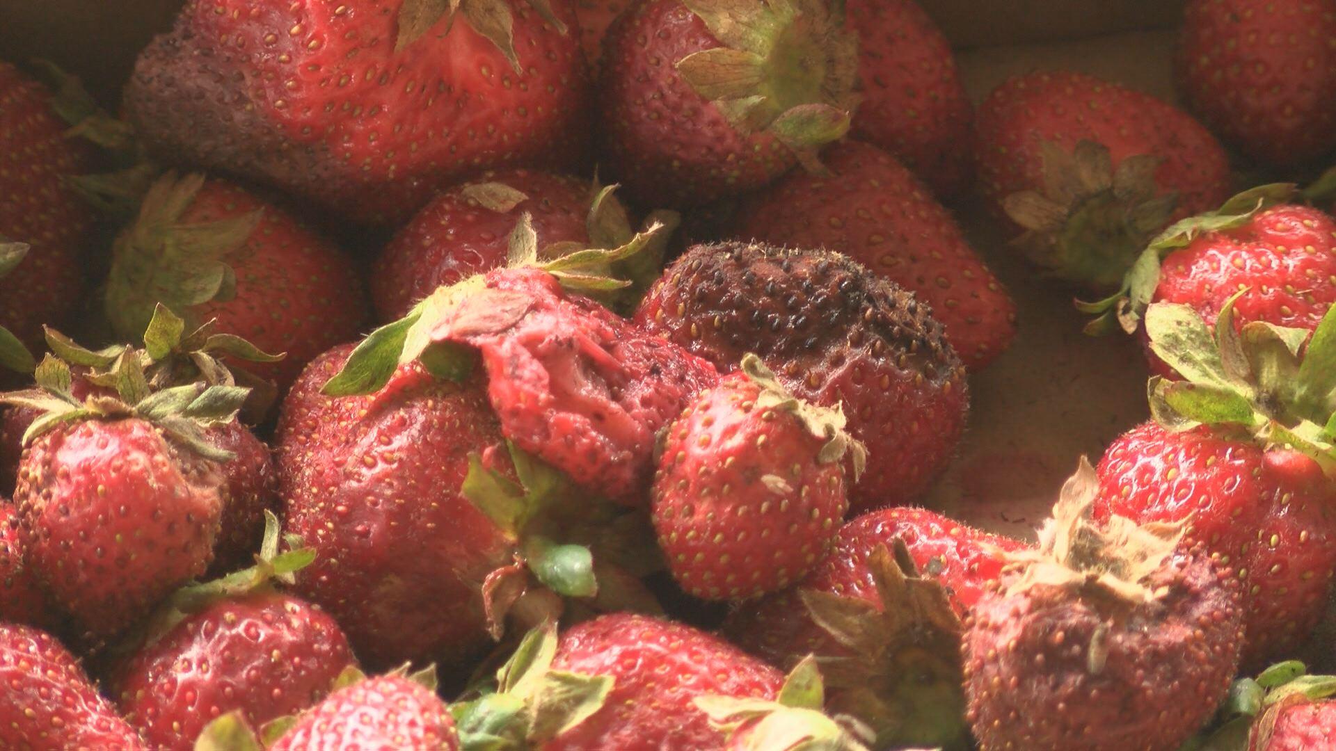 berries_214836