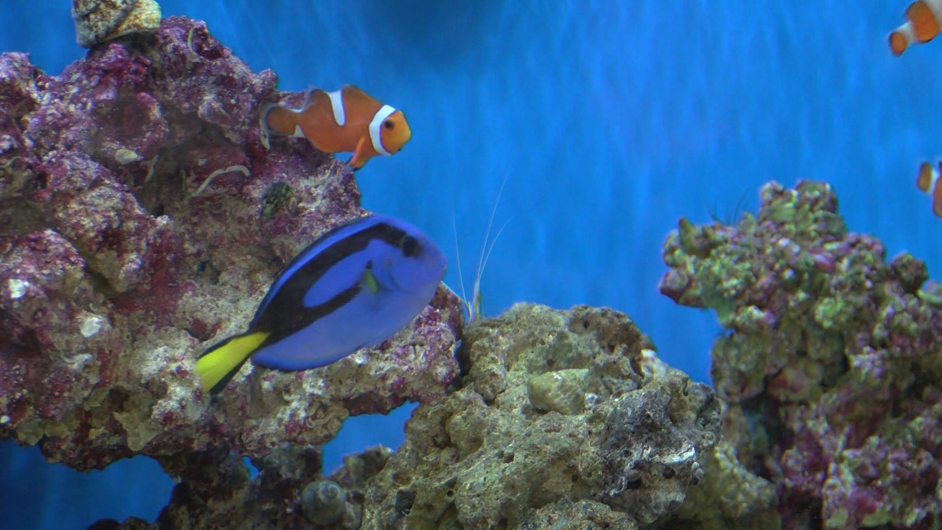 finding dory_231722