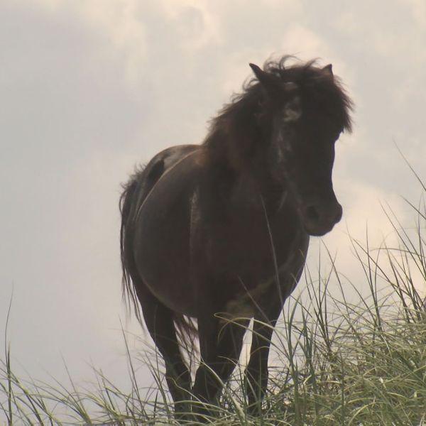 corolla wild horses_240698