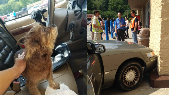 dog crashes car_251950