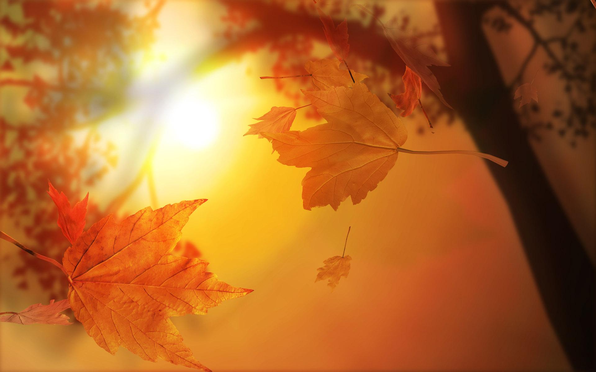 Nature_Seasons_Autumn_Autumn_Sun_025912__259864