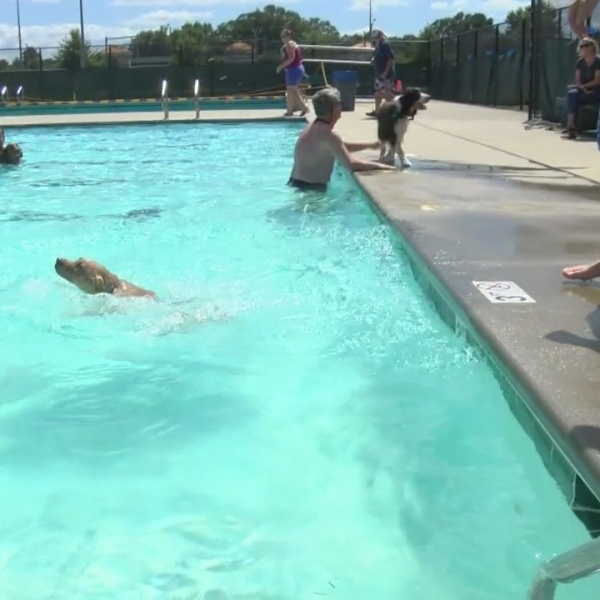 Greenville hosting doggie pool party Sunday