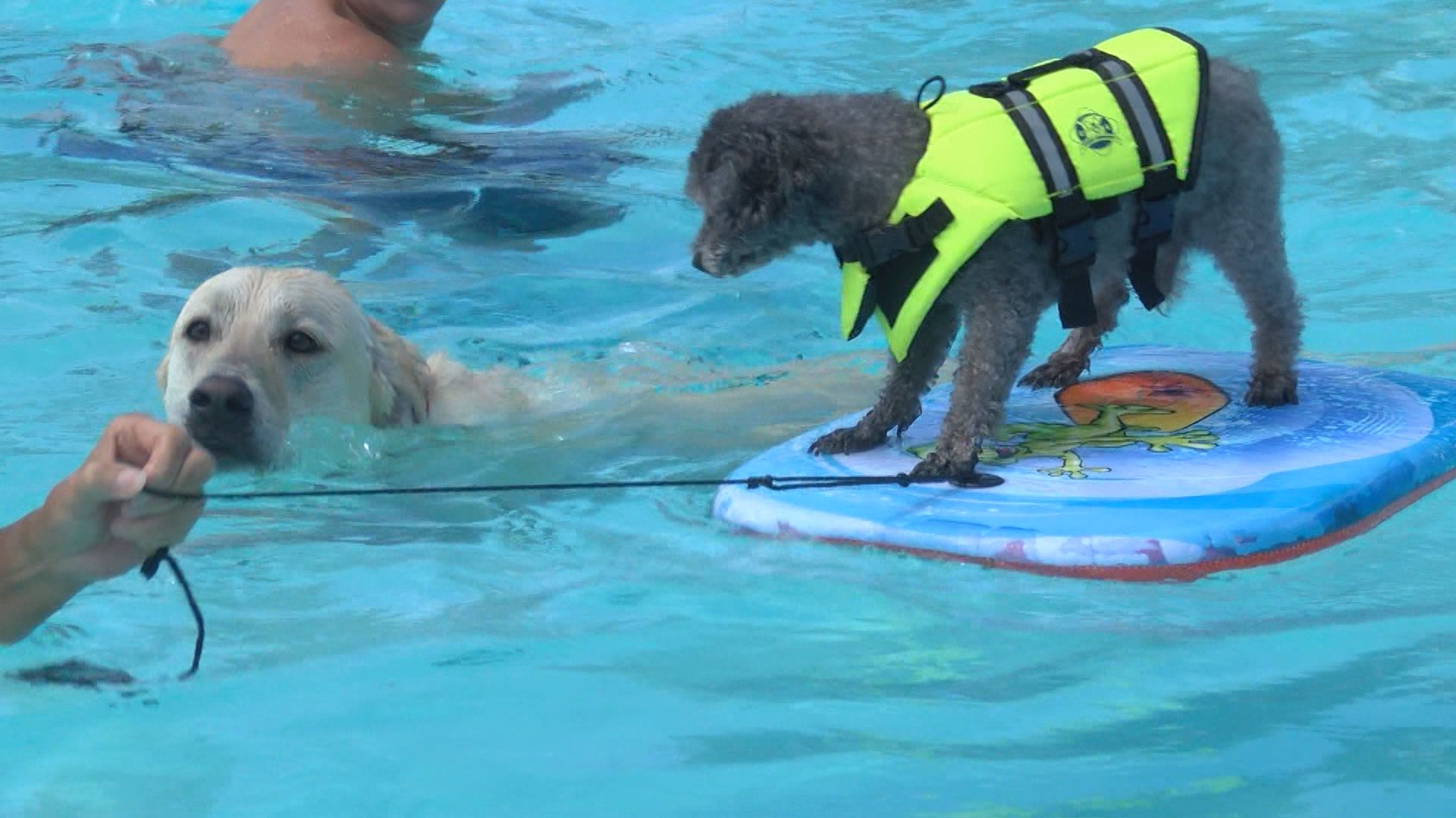 DOGGIE POOL PARTY_267384