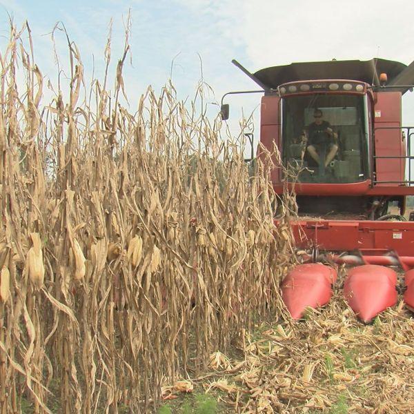 farmer-harvest_279027
