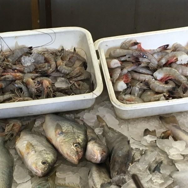 fish_294333