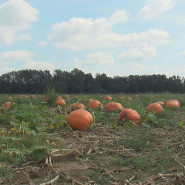 pumpkin-2_282038