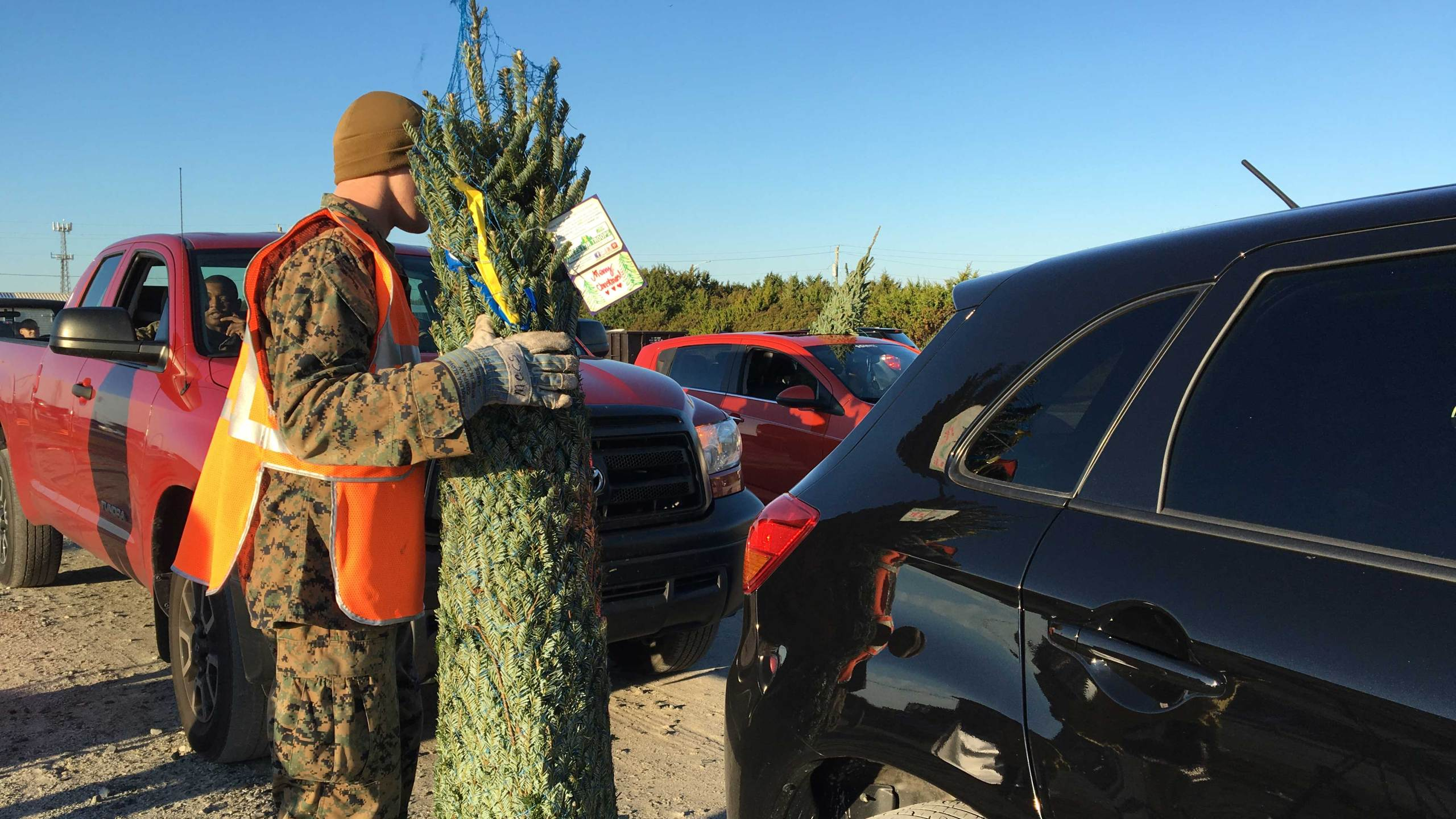 Free Christmas trees distributed to military at Camp Lejeune