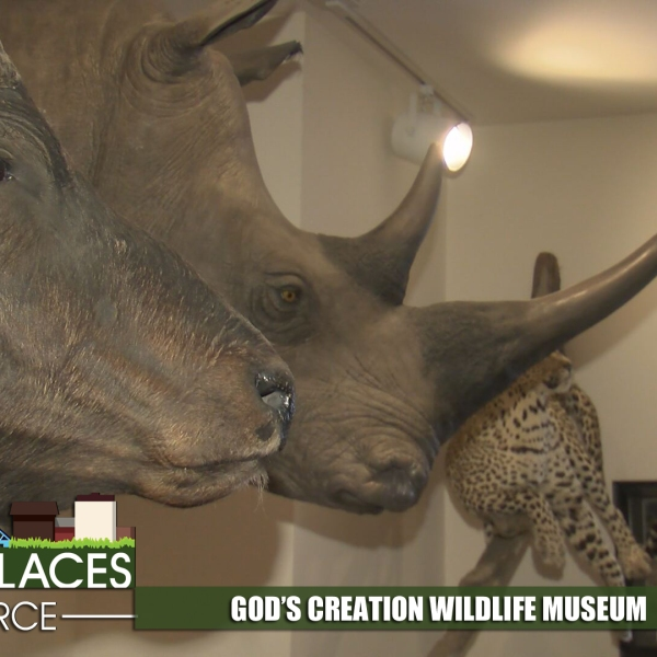 gods-creation-wildlife-museum-for-web_310771
