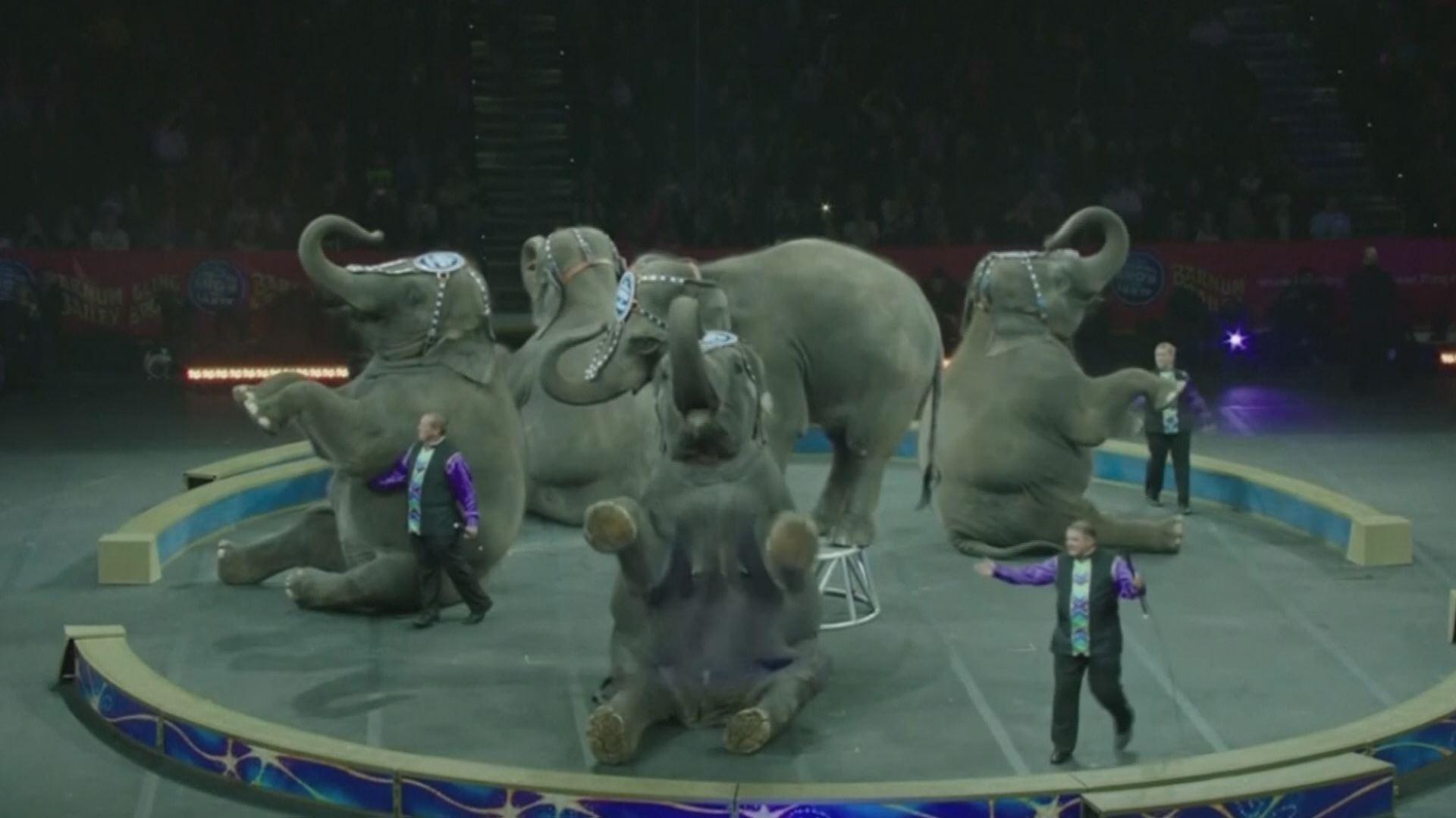 circus-pic_331328