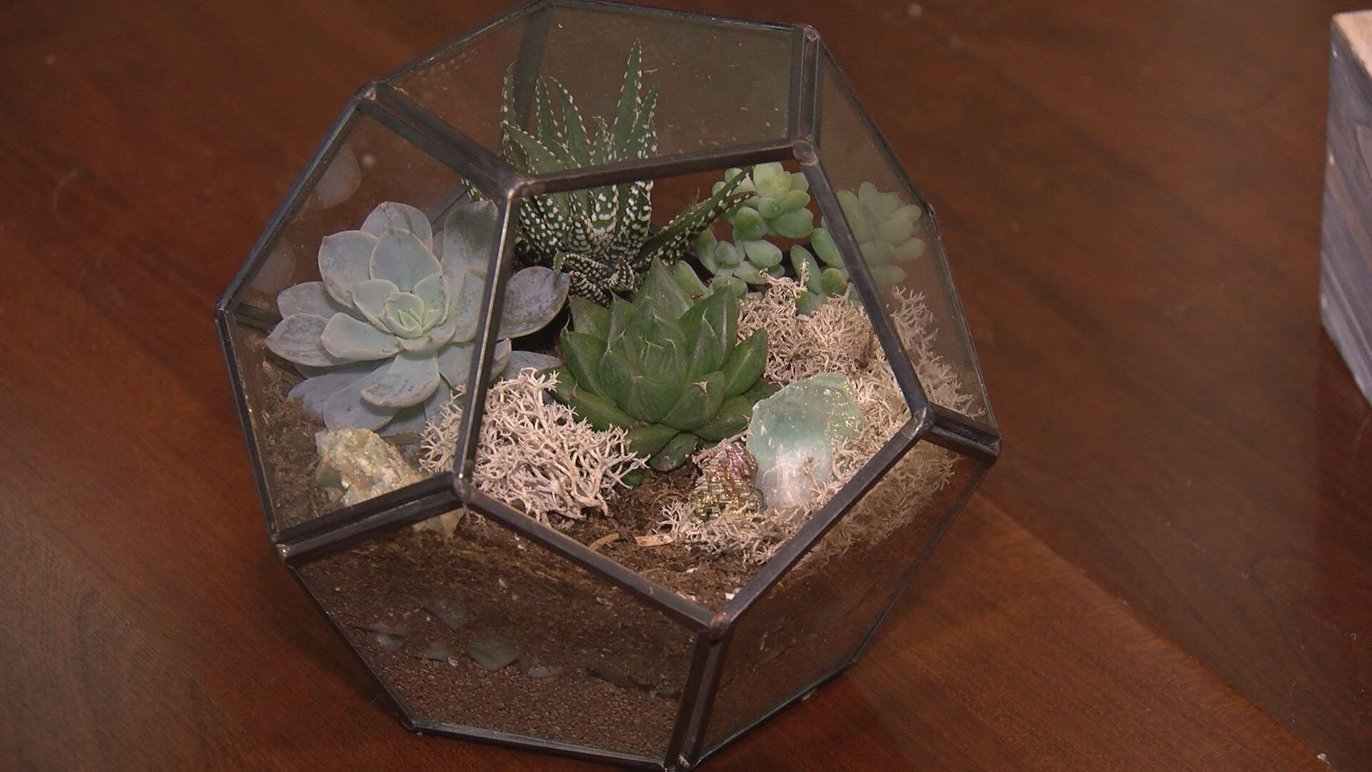 Make It Monday Diy Succulent Terrarium Centerpiece