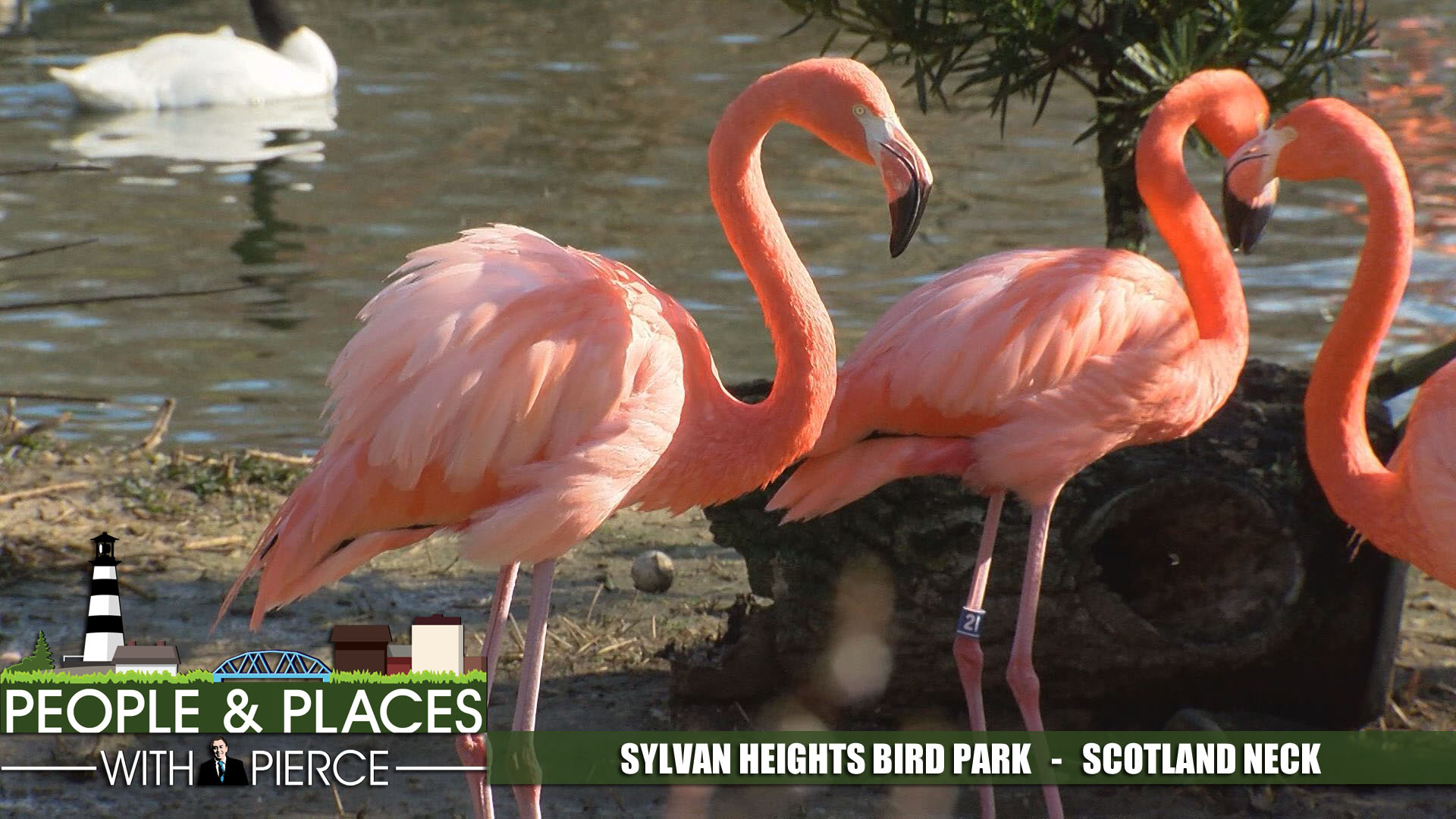 sylvan-heights-bird-ppp-park-for-web_339371