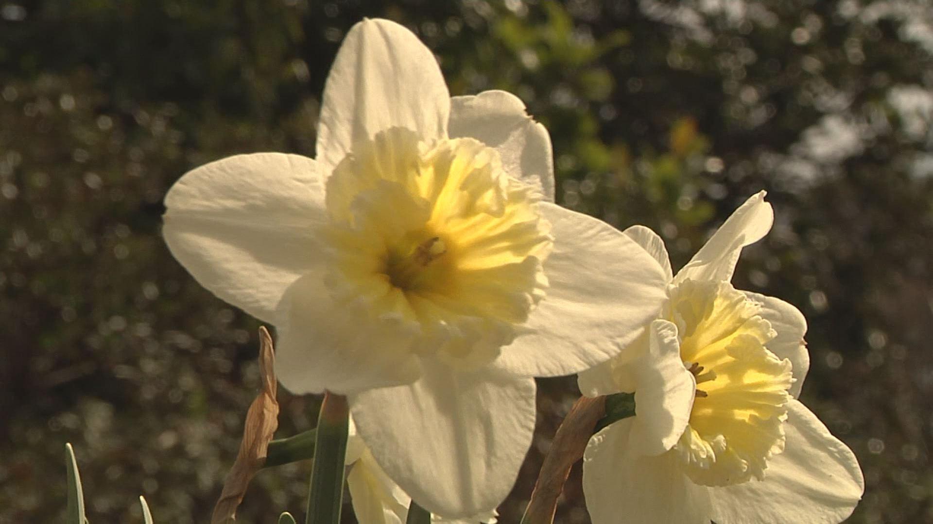 flower_361156