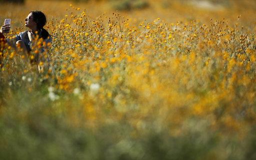 Desert Super Bloom_378470