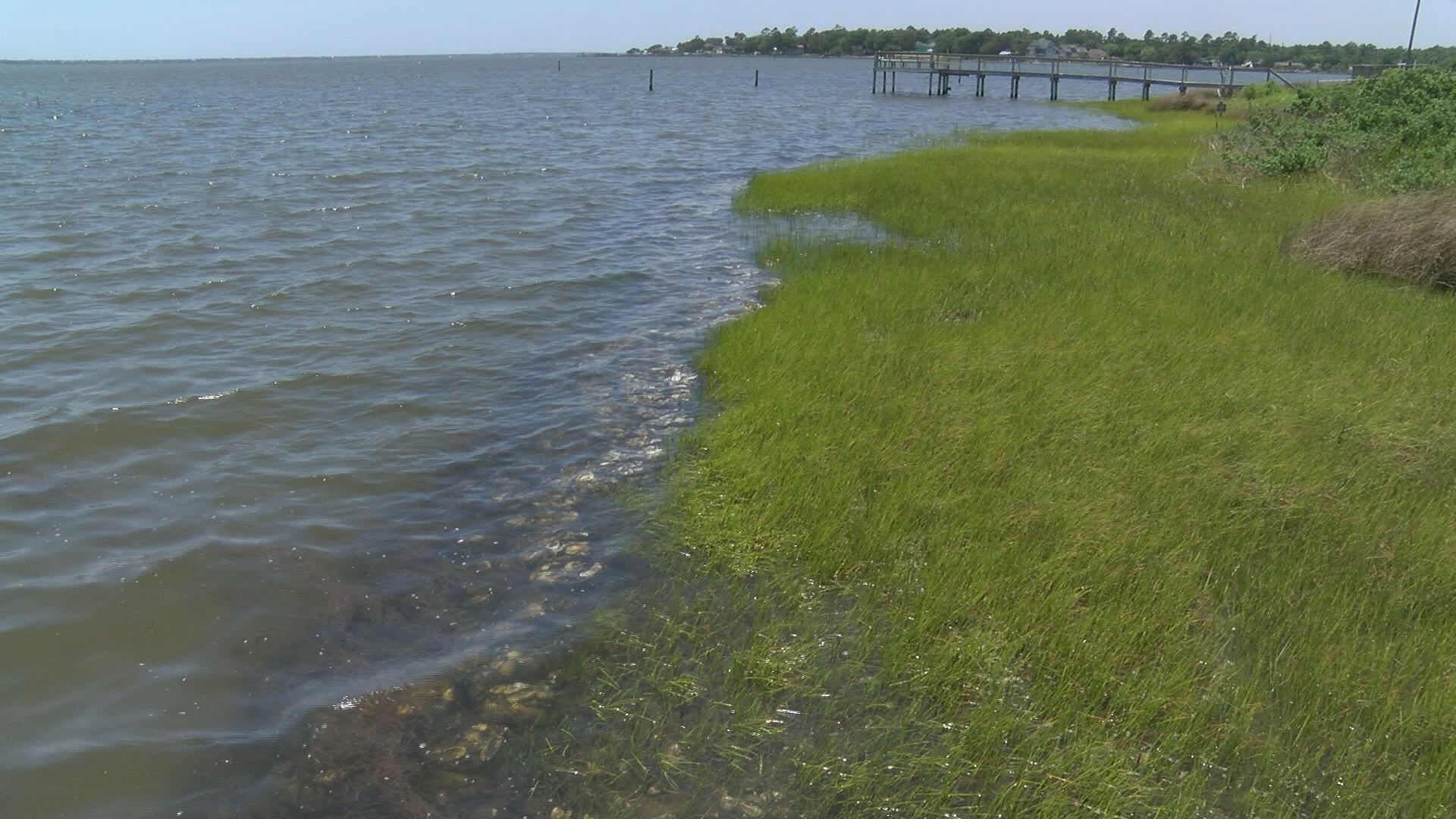 living shoreline_412516