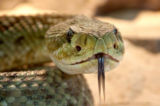 snake_395861