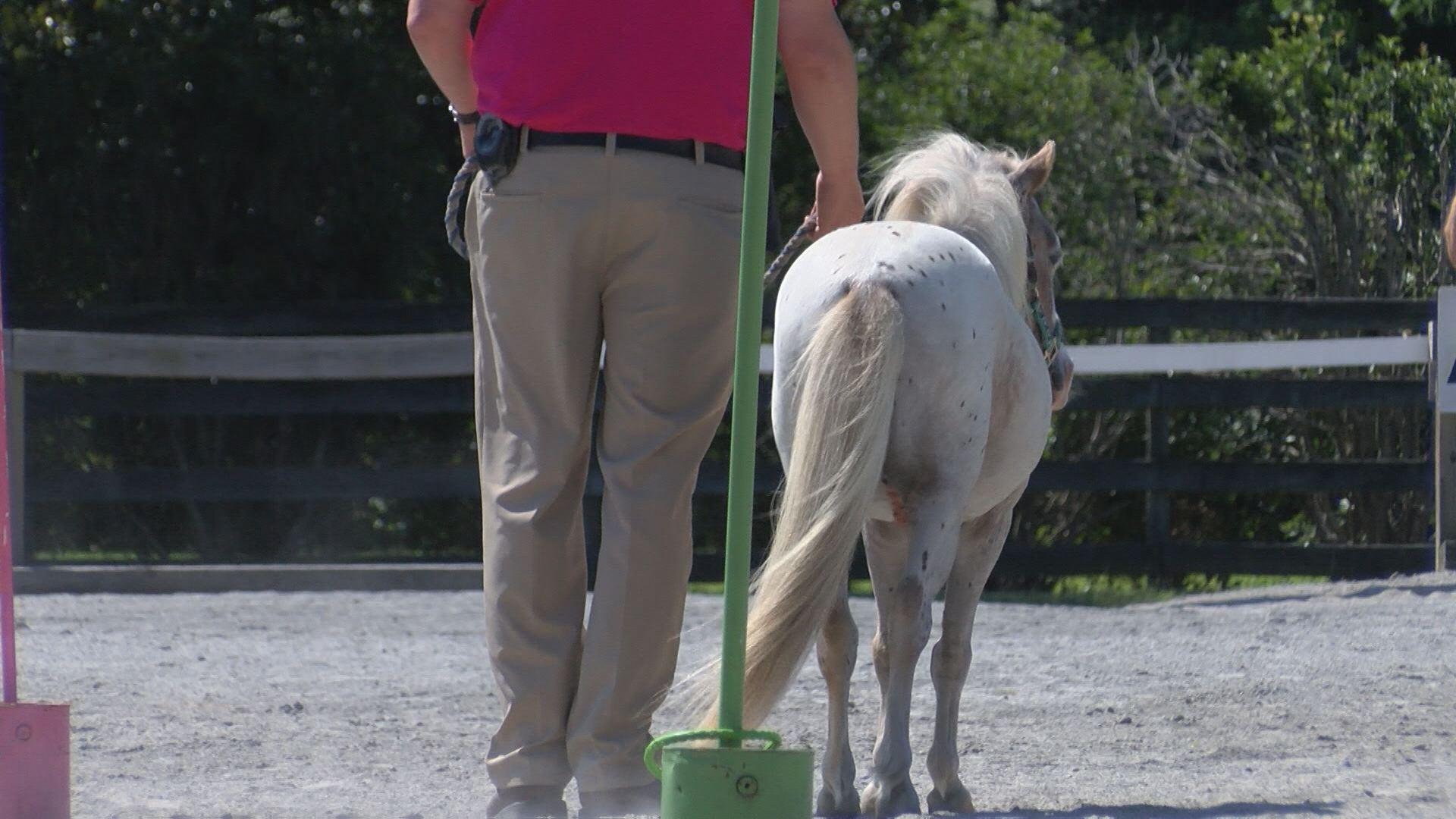 EMILY MINI HORSE_437185
