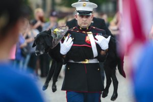 Military Dog Farewell_445311