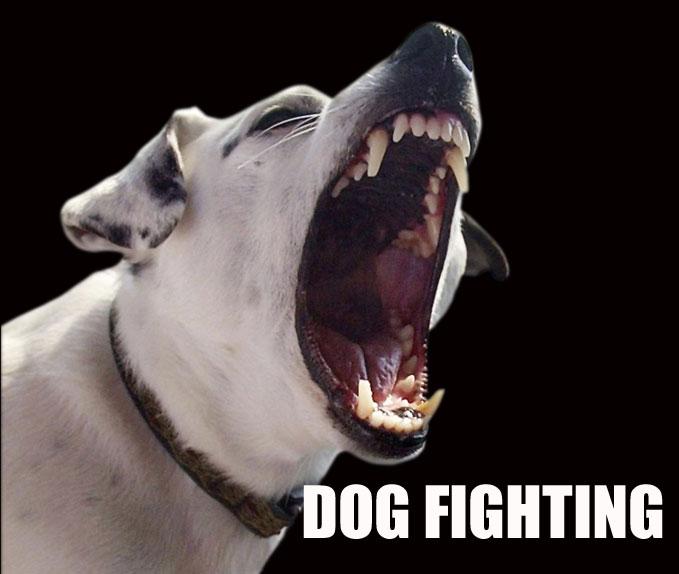 dogfighting_313944