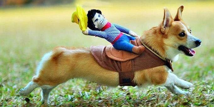 dog costume_493085