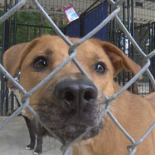 LENOIR COUNTY ANIMAL SHELTER_261575