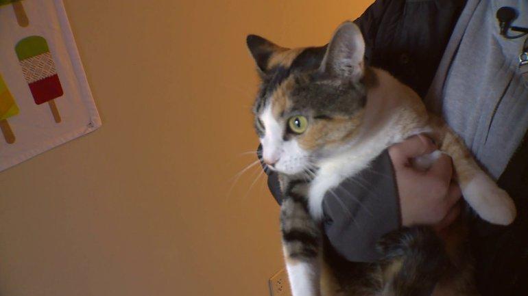cat VCU_518363