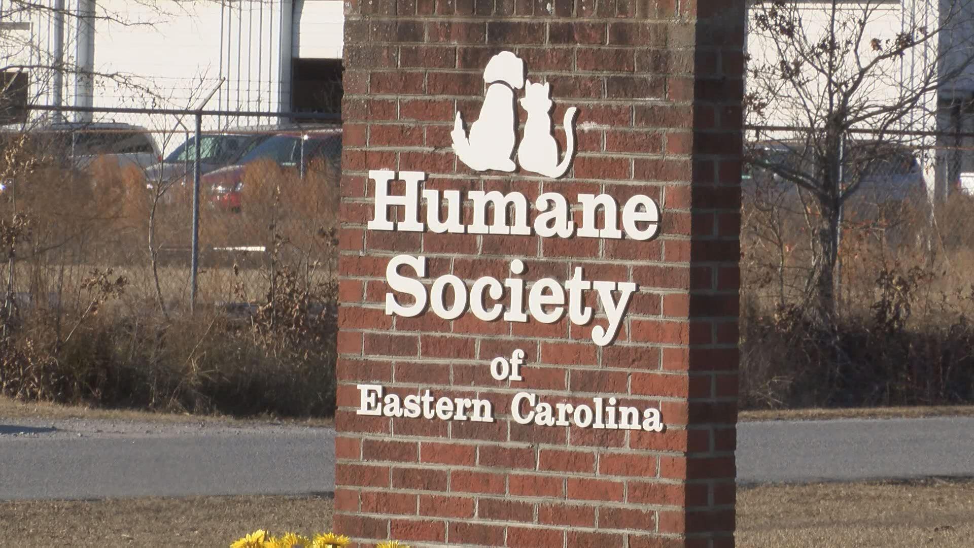 humane-society-senior_353603
