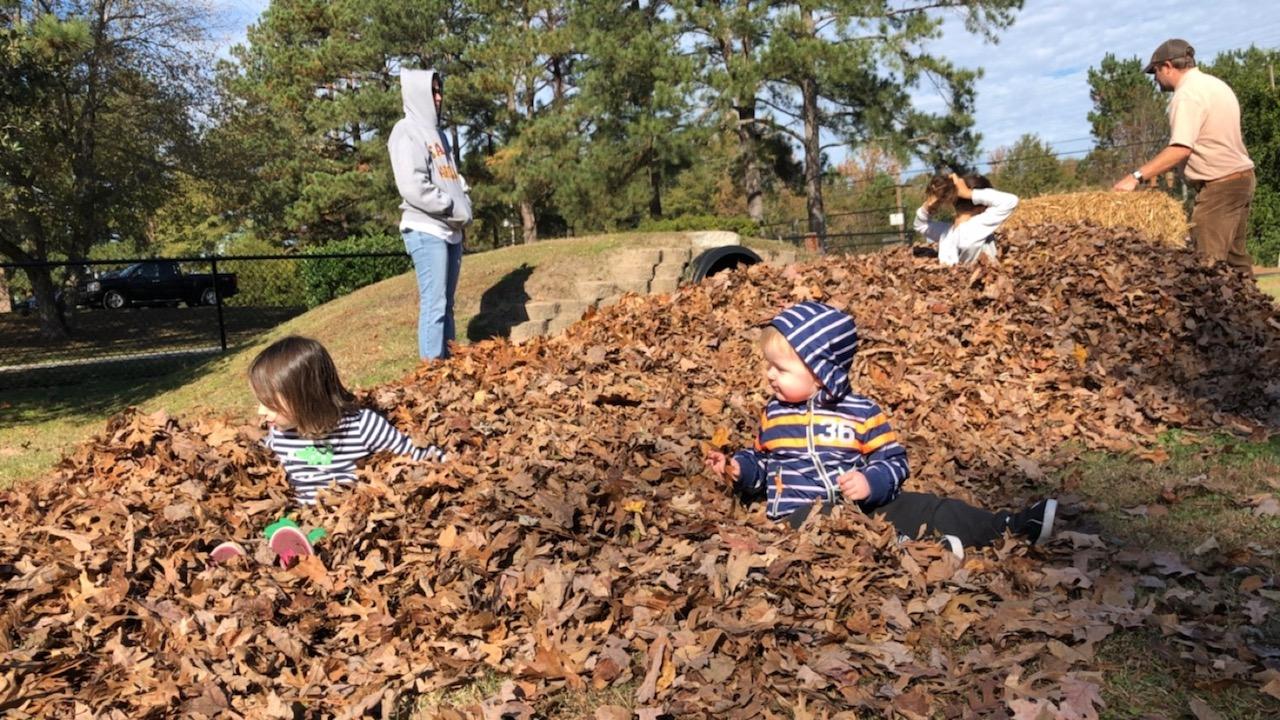 leaf pile day_511424