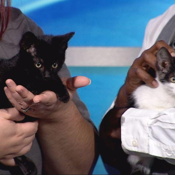 PET VISIT 2 CATS_517616