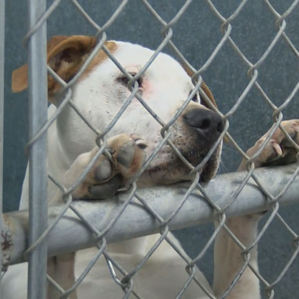 PITT CO ANIMAL ORDINANCE_512953