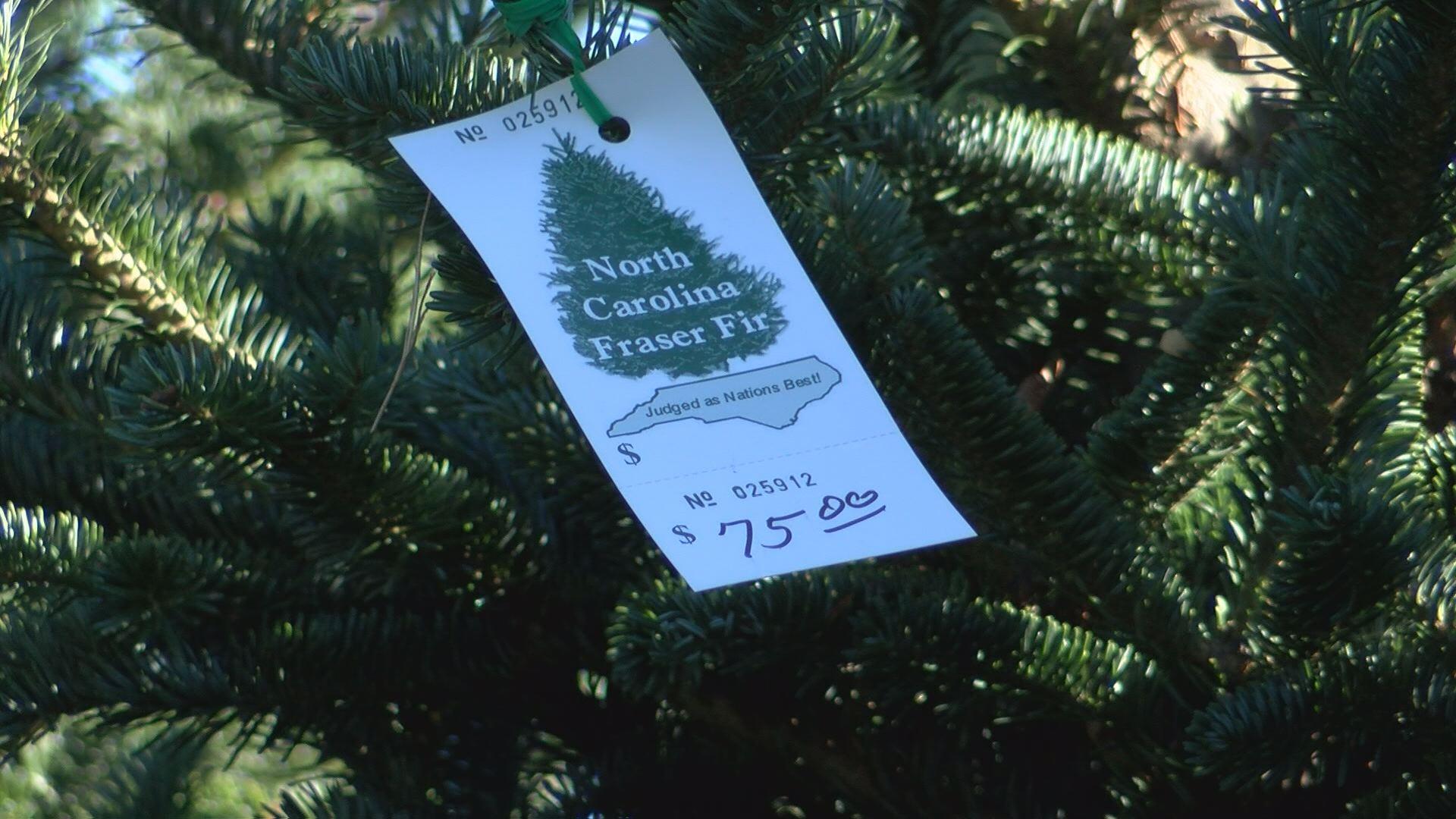 xmas tree price_512735