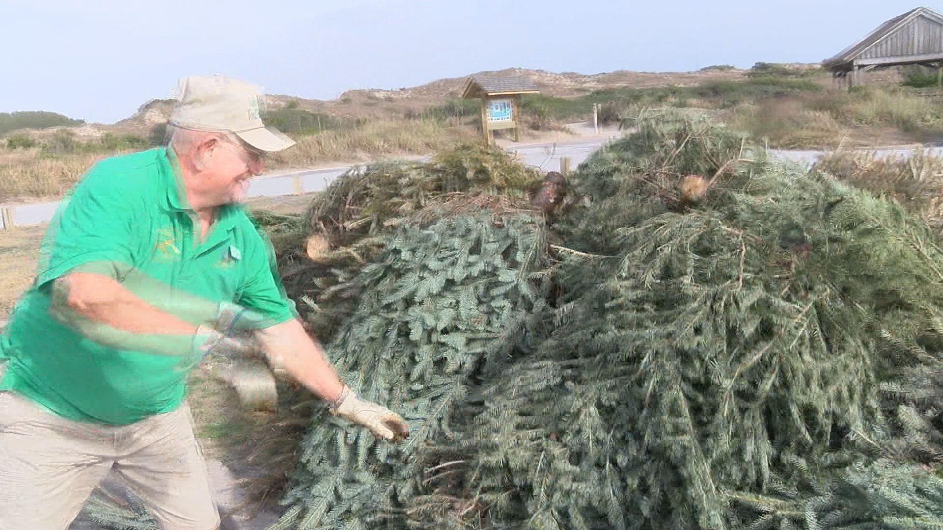 christmas trees_141382