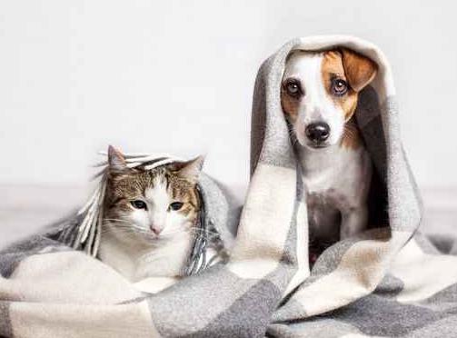 pets in blanket_538149