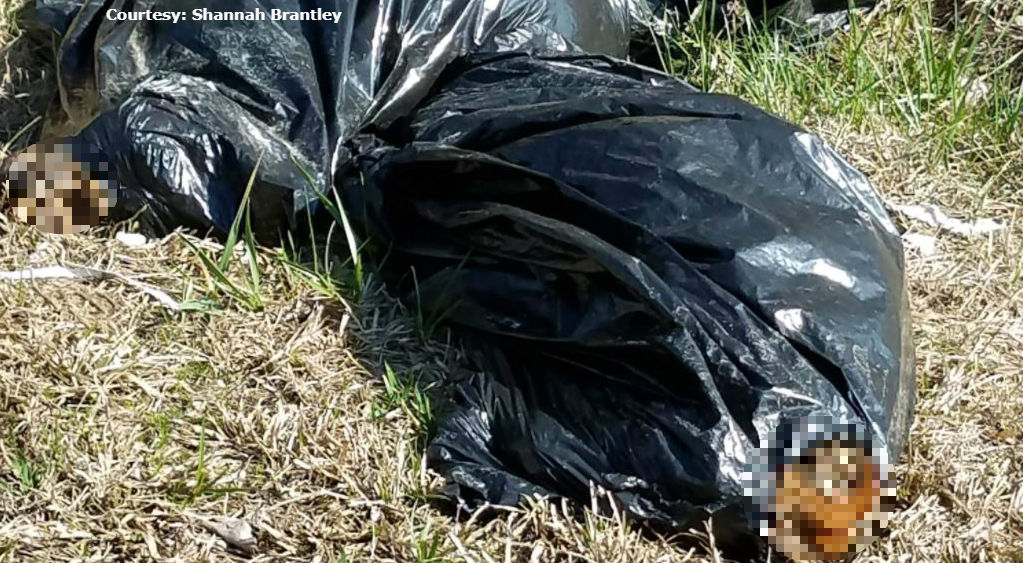 dumped-dogs-bags_569719