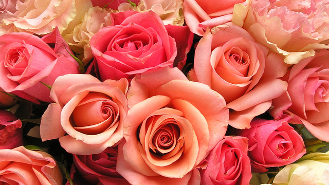 roses-flowers-valentines-day_1517879321399_340223_ver1-0_33247436_ver1-0_640_360_559398