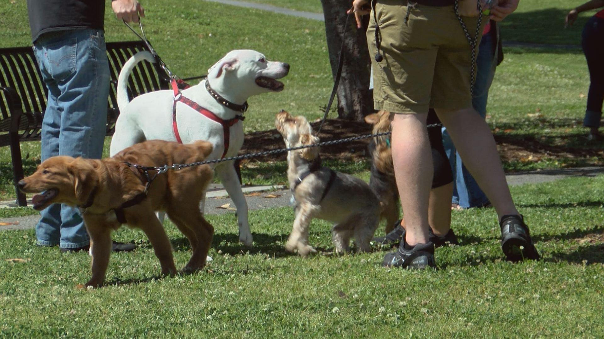 PETS IN THE PARK_1524953905301.jpg.jpg