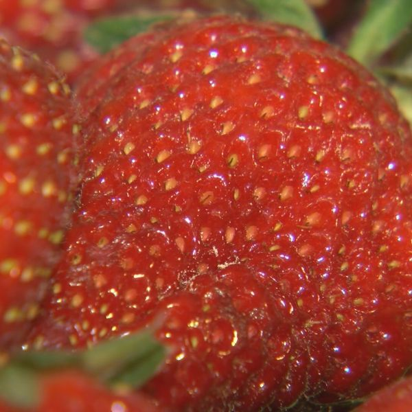 STRAWBERRY STILL FOR WEB & PLASMA - DM_1524623643433.jpg.jpg