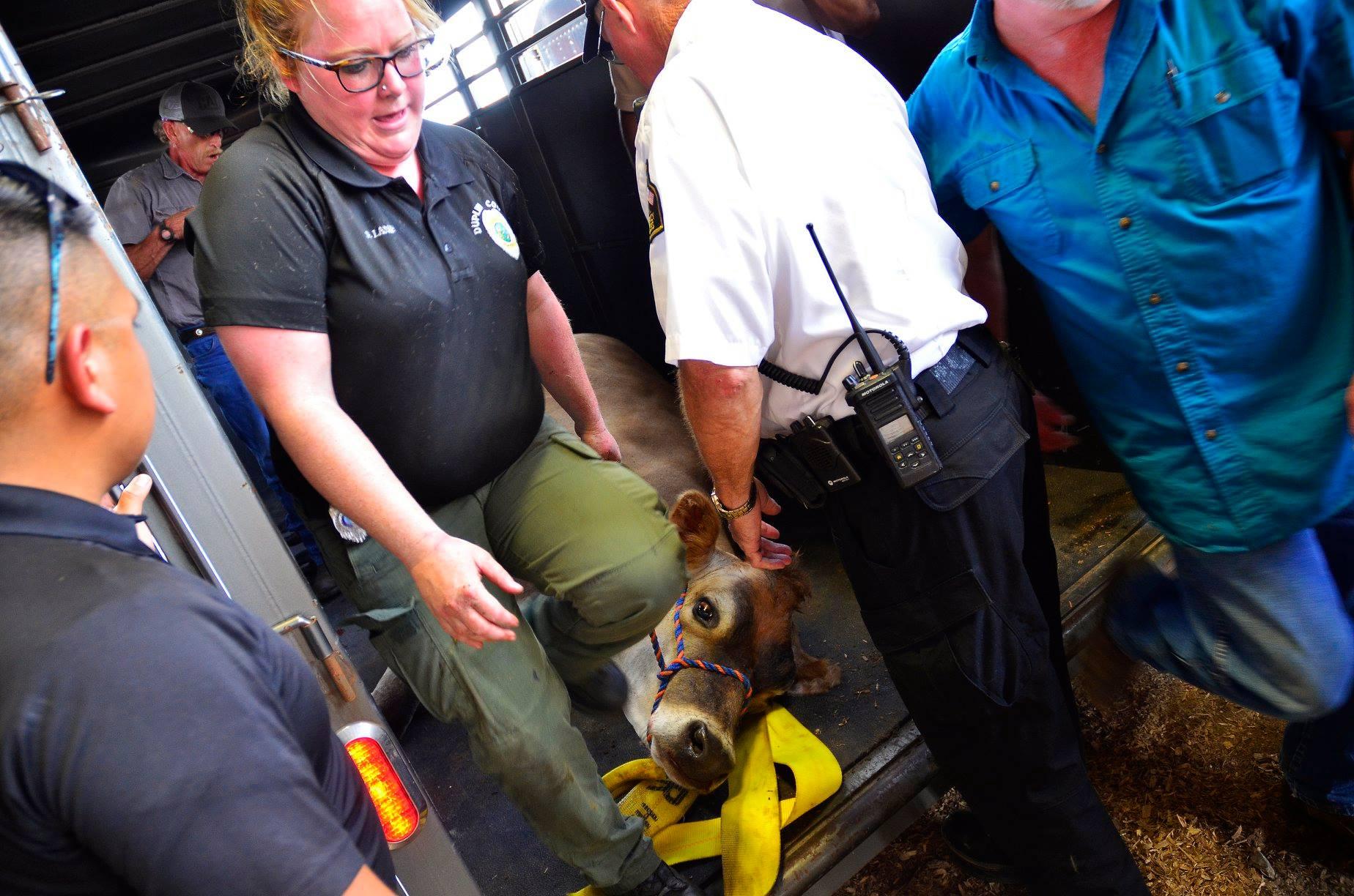 Steer Rescue