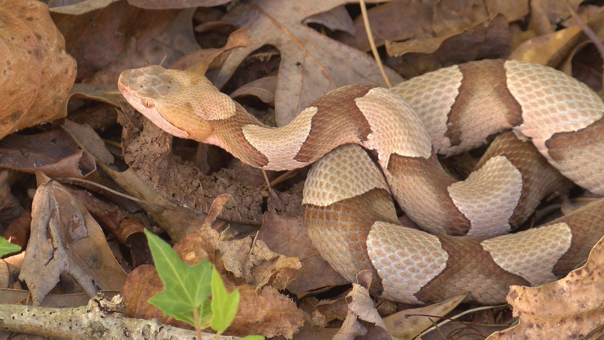 snake_397762